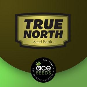 ACE SEEDS TRUE NORTH SEEDBANK