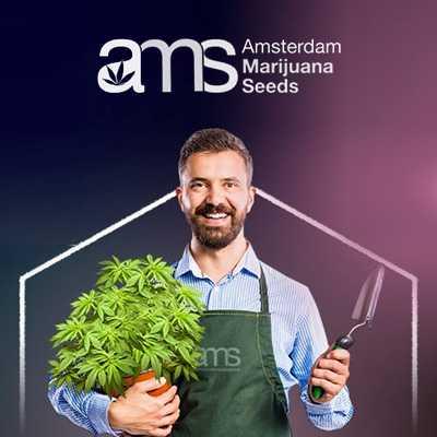 AMS discount code