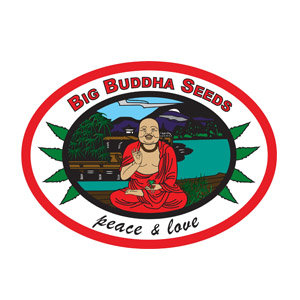 BIG BUDDHA SEEDS DISCOUNT