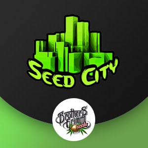 BROTHERS GRIMM SEED CITY