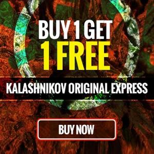 BUY 1 GET 1 FREE KALASHNIVOKA SEEDS