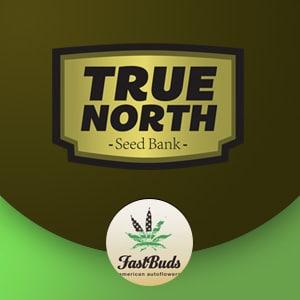 FAST BUDS TRUE NORTH SEEDS