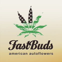 FASTBUDS AUTO 1