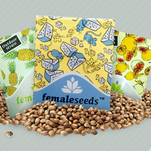 FEMALE SEEDS DISCOUNT 1