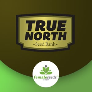 FEMALE SEEDS TRUE NORTH SEEEDS