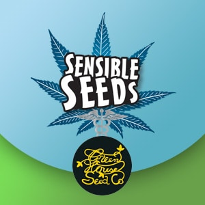 GREENHOUSE SEEDS DISCOUNT SENSIBLE SEEDS
