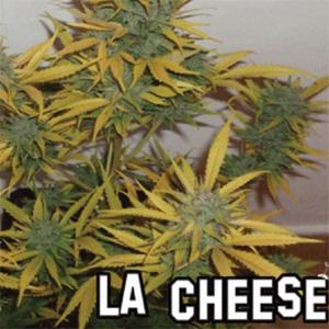 LA CHEESE DISCOUNT 1