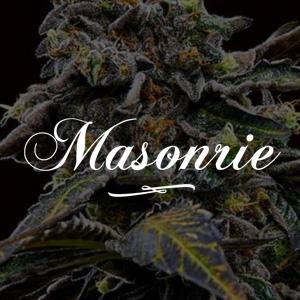 MASONRIE SEEDS DISCOUNT
