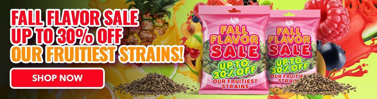 MSNL Fall Flavor Sale Web Banner 30082021 1