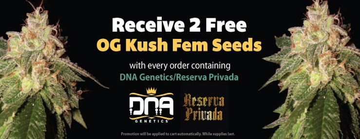 OG KUSH DNA TRUE NORTH