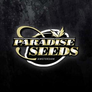 PARADISE BLACK