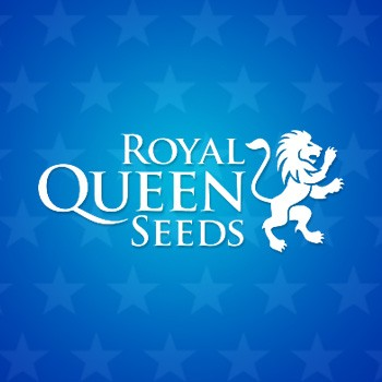 ROYAL QUEEN SEEDS INDEPENDENCE DAY