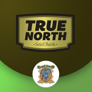 TRUE NORTH SEEDBANK SWEET SEEDS1