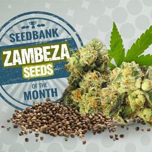 ZAMBEZA SEEDS DISCOUNT