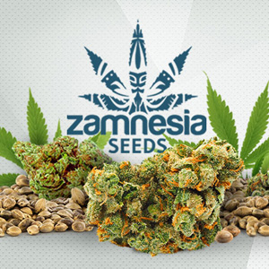 ZAMNESIA SEEDS DISCOUNT