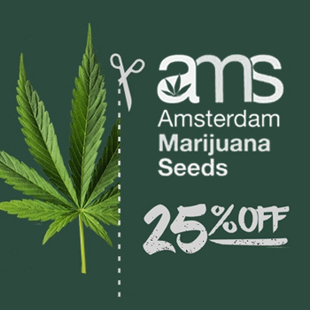 ams 25 off discount