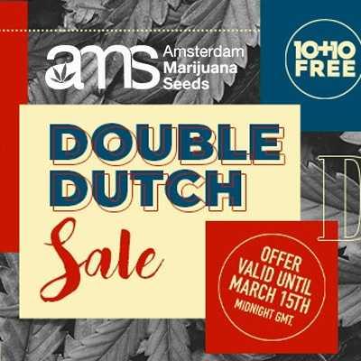 amsterdam marijuana seeds double dutch