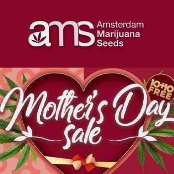 amsterdam marijuana seeds mothers day