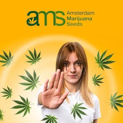 amsterdam marijuana seeds tension tamer