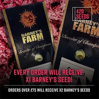 barneys freebies 420 seeds