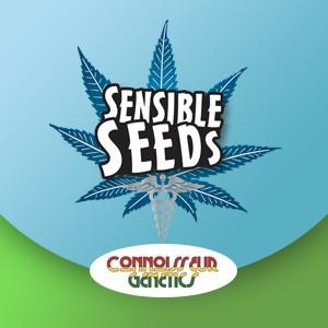 connoisseur genetics sensible seeds