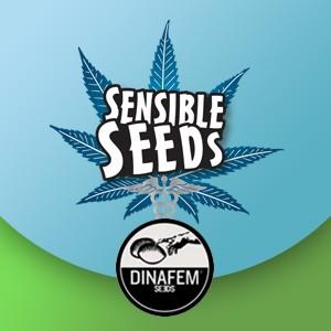 dinafem seeds sensible seeds