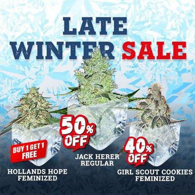 late winter sale msnl discount