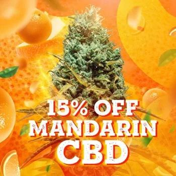 msnl mandarin cbd discount