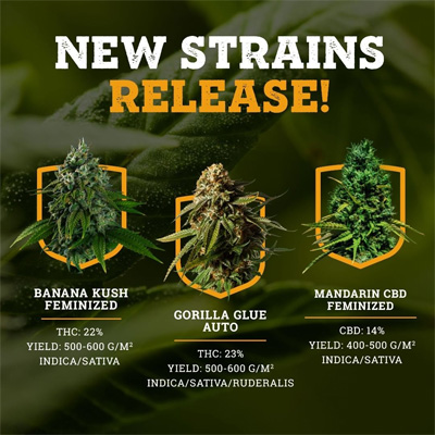 new strains msnl coupon code