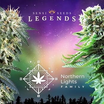 northern lights sensi seeds coupon