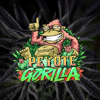 peyote gorilla seedsman
