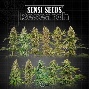 sensi seeds research discount