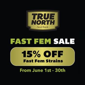 true north fast feminized sale